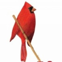 Cardinal Business Financing Dan Casanta