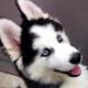 hello54927's avatar