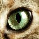 catsclaw