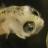 Douglas Bagnall's avatar