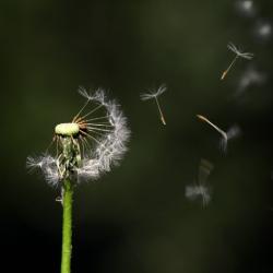 Gayané Adourian