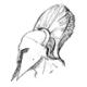 Spasi's avatar