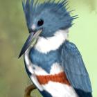 AreryBird