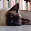 Immagine avatar per Pablo