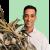 eucalyptus olie voordelen 1