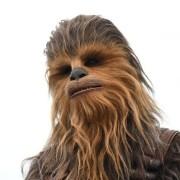 Photo of Chewie