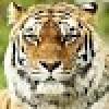 выбор катамарана 44 -48фт. - последнее сообщение от Tiger19