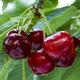 cherryredblogs
