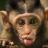 Hein-Pieter van Braam-Stewart's avatar