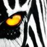 random.zebra