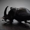 Avatar of Jens Luetkens