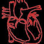 Structural Heart Disease Australia