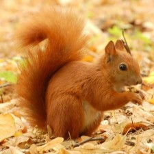 Avatar for 5quirrel from gravatar.com