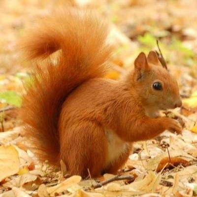 5quirrel