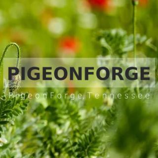 PigeonForge