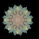 Chandra Wellness