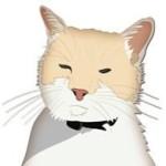 Avatar for Silver Kitten