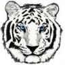 Tiger99