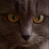 raw0w avatar