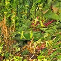 Heilkraeuter und Tee aus Paraguay