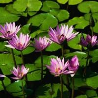 Bunga Majemuk Berbatas Dan Bunga Majemuk Tak Berbatas Nursalinahbioz08 S Blog