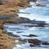 Aberto concurso público internacional para corte, venda e reflorestação de 92 hectares de criptoméria nos Açores