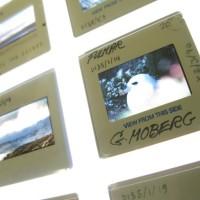 The Gunnie Moberg Archive