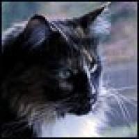 (c) 2x4katzentatzen.wordpress.com