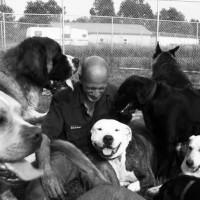 The Spirit Dog Dog Behavior Dog Sanctuary Stuff