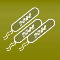 Probiotics: Lactobacillus rhamnosus – a MCS probiotic?
