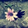 Nhất đại tông sư - Khi tình yêu không thể cứu rỗi số phận