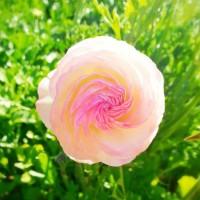 About FlowerFolio