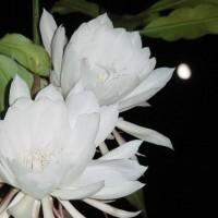 Nguyễn Cẩm Xuyên - VỤ ÁN LỆ CHI VIÊN: MỘT THỦ ĐOẠN, MỘT ÂM MƯU TÀN BẠO