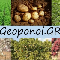 Μελιτζάνα: Καλλιεργητικές Τεχνικές